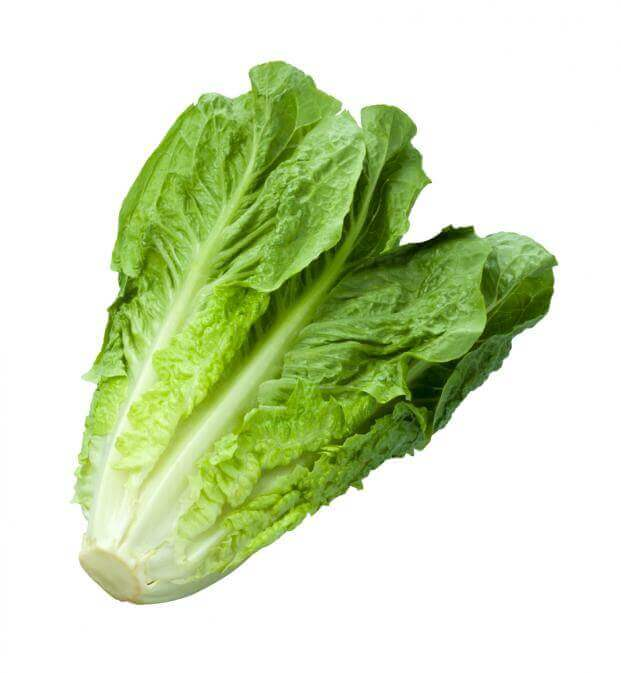 Lettuce (Romaine) Image